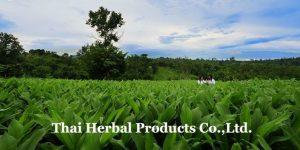 ผลิตภัณฑ์สมุนไพรไทย จำกัด